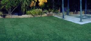 Turf / Synthetic Grass