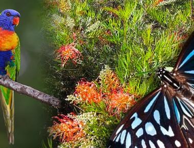 wildlife-gardens